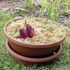 out carnivoreplants