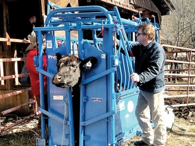 Cattle working equipment available for community use