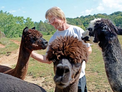 Livestock you love: Bethel man carves out a life among alpacas