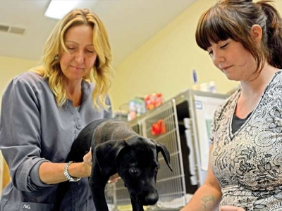 Rural animal care offers constant joy, constant challenge for vet clinic