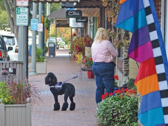 Puppy party postponed: Proposed Waynesville ordinance told by board to sit, stay
