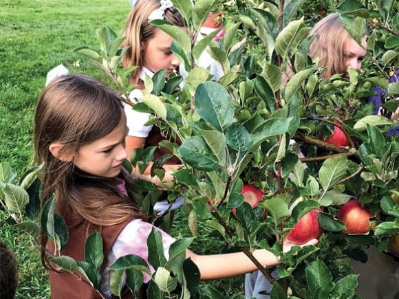 Scouts bring in the apple harvest