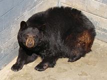 fr blackbear