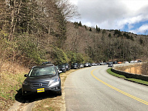 Vehicles park down the side of the Parkway March 26 as the parking lot for Rough Ridge Trail near Asheville is filled to overflowing. NPS photo