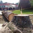 fr treesgone