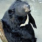 fr bearzoos