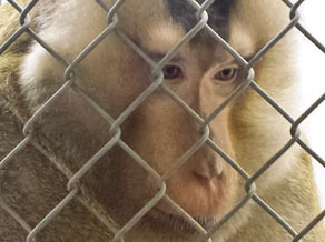 fr monkey