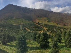fr treegrowing