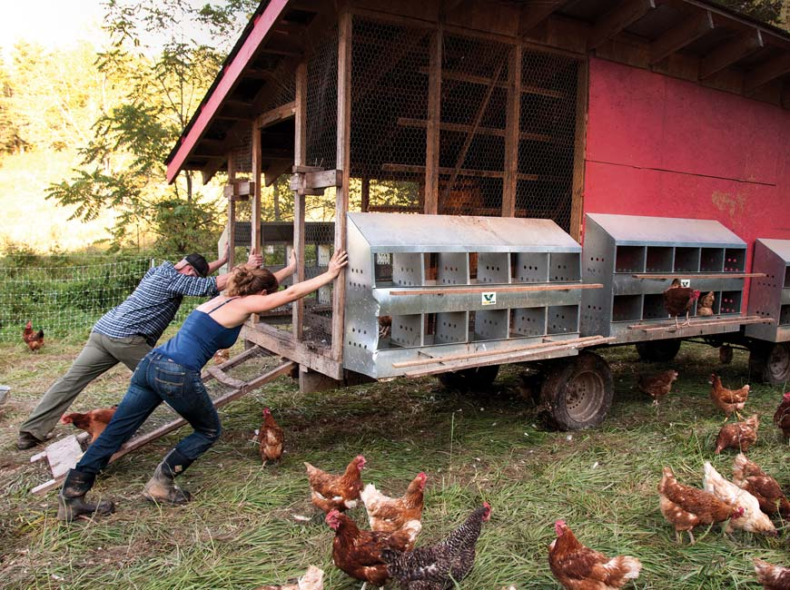 out chickentractor