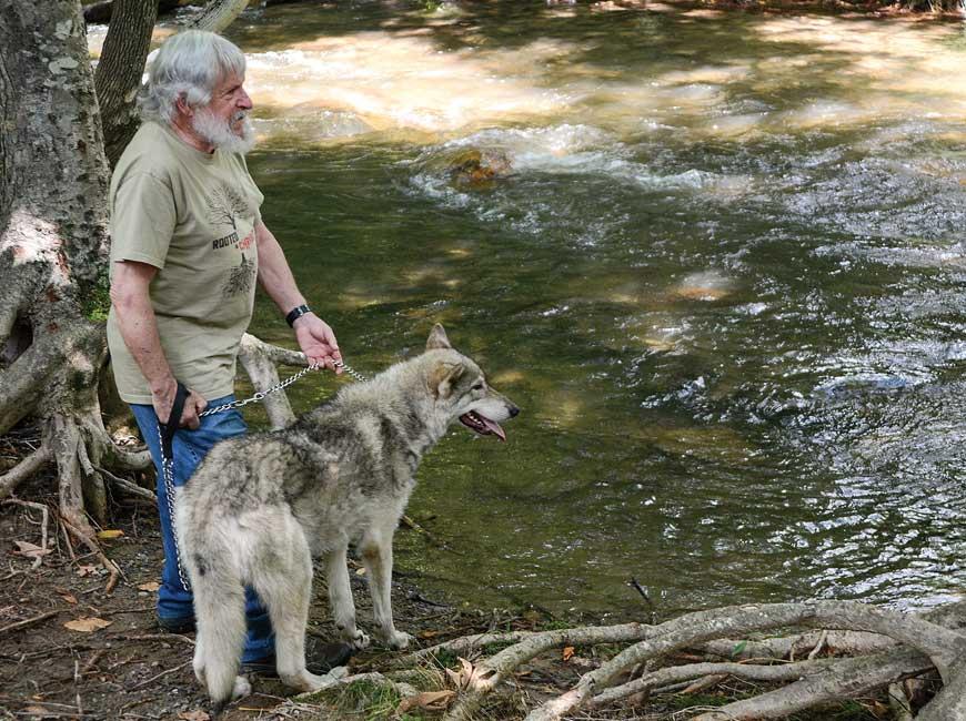 fr wolf1