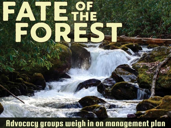 Stakeholders offer initial feedback on long-awaited forest management plan