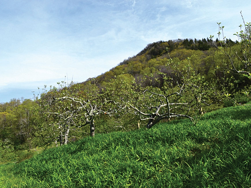 The property includes a heritage apple orchard. SAHC photo