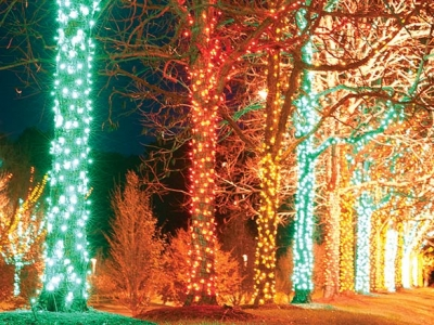 Arboretum to light up for winter