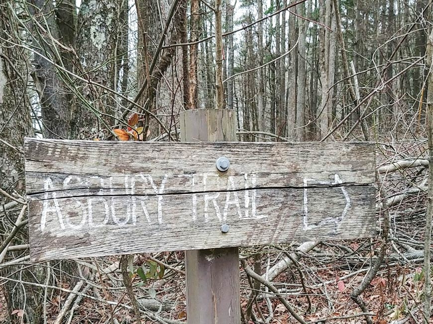 Asbury Trail in the Great Smoky Mountains. (photo: Garret K. Woodward)