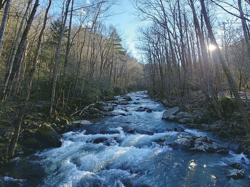 Big Creek, Great Smoky Mountains National Park. (photo: Garret K. Woodward)