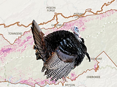 Species mapper unveiled in the Smokies