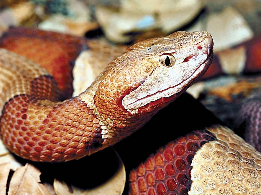 Snakes, really, are beautiful creatures