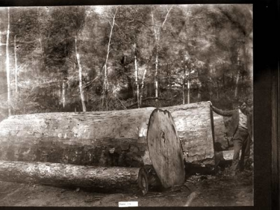 Logging has always been dangerous work