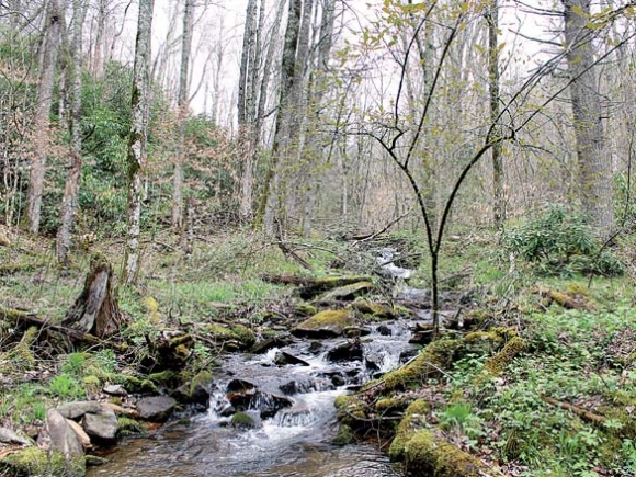 Indian Creek runs through the William H. Silver Game Land. The Conservation Fund photo