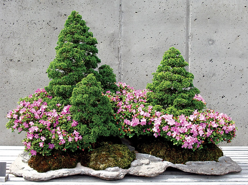 The Bonsai Expo is canceled, but the bonsai exhibits will return to display on World Bonsai Day May 8.  N.C. Arboretum photo