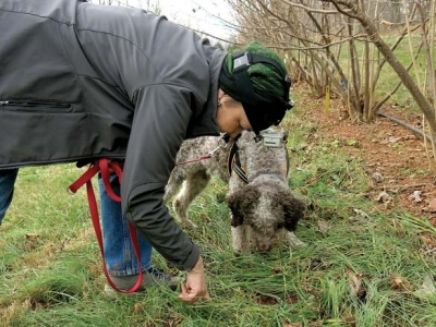 Resurrecting the truffle: Researchers look to learn about cultivation potential in N.C.