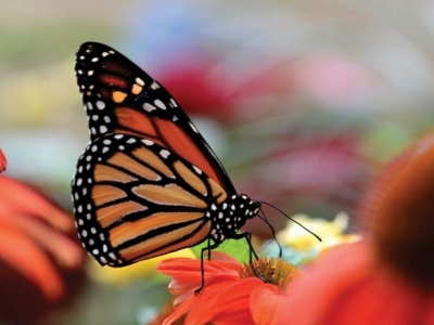 Winged wonders: Butterfly house is a living exhibit at the N.C. Arboretum