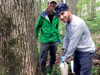 Keeping ash in the Smokies: Land managers, conservation groups work to protect ash from invasive pest